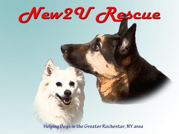 Home - New 2 U Rescue